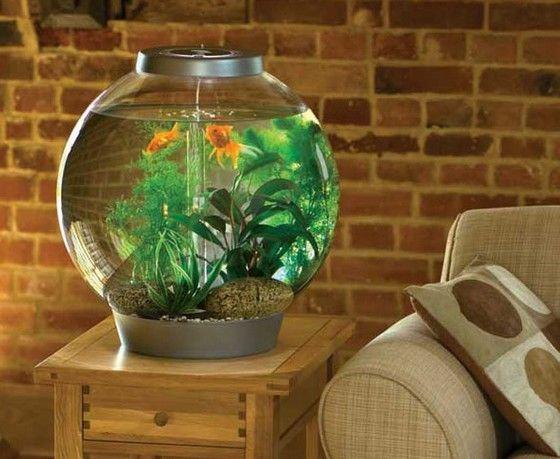 Довольно часто в качестве домашних любимцев аквариум с рыбками.