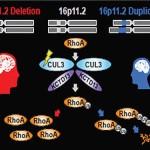 Гены аутизма активируются во внутриутробном периоде развития