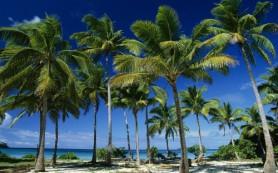 Вредно ли пальмовое масло: доводы за и против