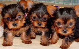 Где можно купить щенков?