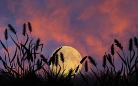 Как влияет Луна на посадку растений