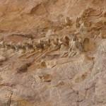 Палеонтологи нашли остатки жившего 100 млн лет назад динозавра