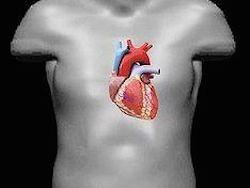 Медики смогут выявлять риск инфаркта за 10 лет до него
