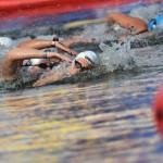 Кубок мира по плаванию на открытой воде в 2016 году будет состоять из восьми этапов