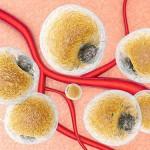 Обнаружен нейронный механизм, ответственный за распад жиров