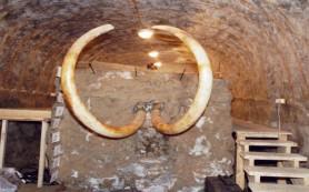Из Приморья в КНР не дали увезти 700 кг бивней мамонт