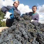 В честь Керченского моста выпустят фирменное вино