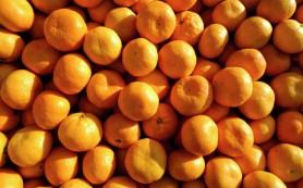 Марокко заинтересовано в увеличении поставок в Россию сельхозпродукции