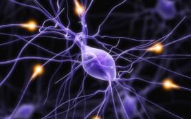 Врачи нашли белок, принимающий активное участие в становлении иммунной системы