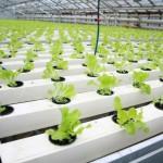 Томские инженеры создали «умные» фитосветильники, ускоряющие рост растений