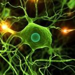 Бактерии обладают коллективной памятью
