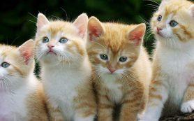 Стерилизация кошек. Ветклиника Био-Вет – лучшие специалисты.