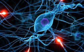 Медики из РФ выяснили, как яд действует на клетки человека