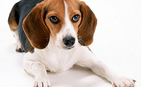 Усыпить собаку в ветеринарной клинике «БИО-ВЕТ»