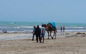 Власти Туниса сделали заявление