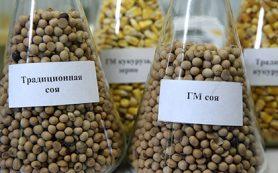 Дума запретила выращивать в России ГМО