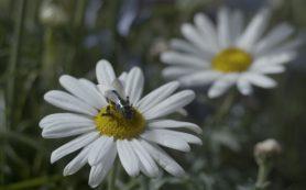 Пестициды вызвали у шмелей амнезию
