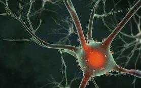 Стволовые клетки помогут в лечении инсульта
