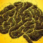 Употребление черничного сока улучшает работу мозга