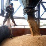 В Минсельхозе рассказали о планах нарастить производство зерна