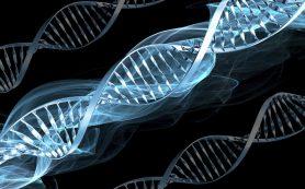 ВИЧ-прорыв: с помощью генной инженерии ученые ликвидировали вирус у животных