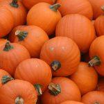 Правила выращивания тыквы
