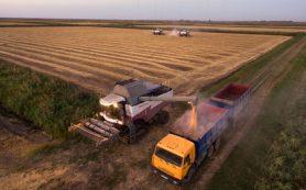 Потери фермеров из-за холодной погоды оценили в 2,6 миллиарда рублей