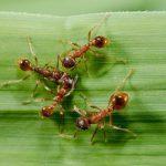 Муравьи помогут медикам лечить псориаз