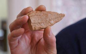 В Калмыкии нашли отпечатки рыб, которым более трех миллионов лет