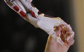 Кости из полиэтилена