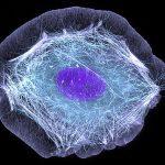 «Растворяющуюся кожу» вылечили с помощью генной терапии