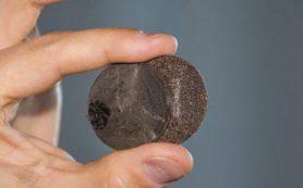 Ученые ДВФУ разработали новый экологически чистый композиционный материал из шелухи гречихи