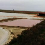 Розовая лагуна дает пищу микроорганизмам, которые могут выжить на Марсе