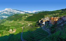 Старейший фестиваль винограда приглашает на дегустацию Шардоне
