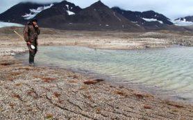 Учёные МГУ изучили влияние глобального потепления на водную фауну Шпицбергена