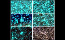 Вновь открытые шаровые скопления звезд позволят глубже понять нашу Галактику
