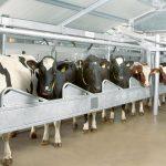 Молочно-доильное оборудование с доставкой по Украине: выгодные условия от ПАО Киевоблагрооборудование