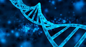 Когда ДНК обманывает криминалистов