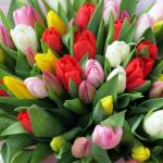 Тюльпаны. Букет цветов.
