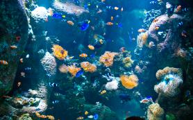 Какие бывают аквариумные рыбки?