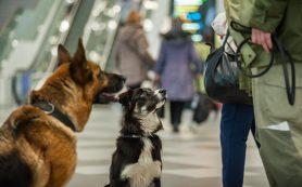 ОАЭ вводят новые правила и процедуры для всех прибывающих туристов