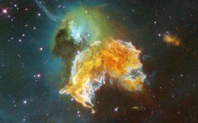 Годичные кольца деревьев на Земле указывают на влияние далеких сверхновых