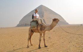 Туристов в Египте пересаживают с верблюдов на электромобили и автобусы
