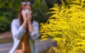 Найдена связь между вдыханием пыльцы и усугублением боли внизу живота