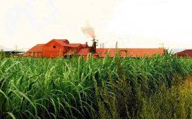 Химики придумали, как помочь растениям очищать почву от тяжелых металлов