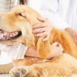 В России заявили о создании первой в мире вакцины от коронавируса для животных