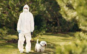 Собаки могут с высокой точностью обнаруживать SARS-CoV-2 по запаху пота