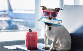 Аэрофлот будет начислять мили пассажирам с животными