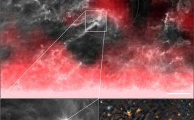 Близлежащая «звездная колыбель» помогает понять формирование Солнечной системы