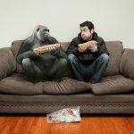 Стоит ли прибегать к услугам профессиональной химчистки диванов